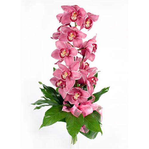 Delicate Delight Single Stem of Pink Cymbidium