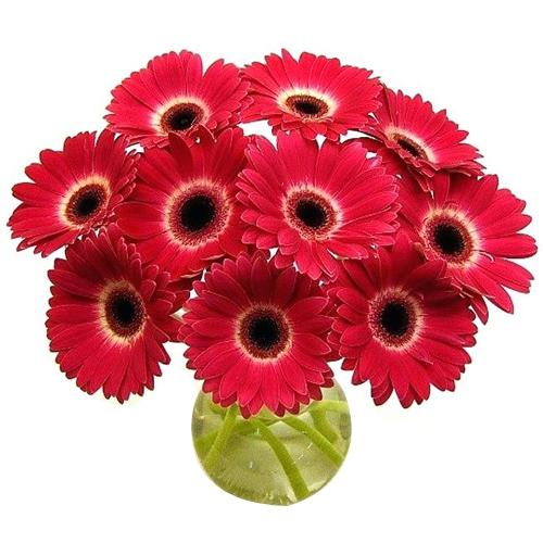Attractive Red Gerberas