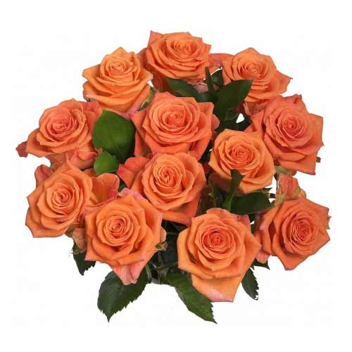Silky-Smooth Arrangement of 12 Roses in Orange