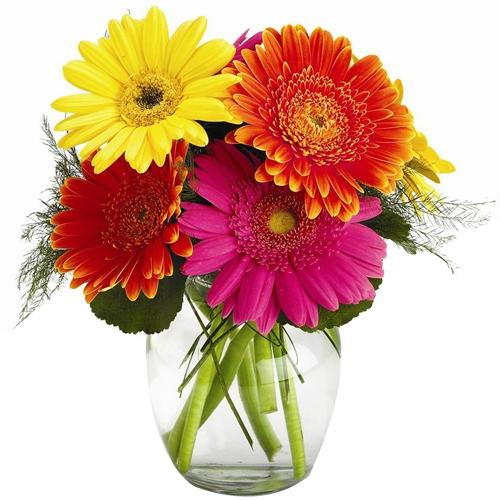 Impressive Multicolored Gerberas Selection in a Bowl